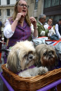 Dogs In Basket 2